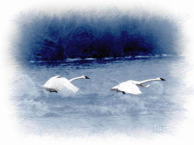 Photograph - Cold Flight by Kathy M Krause