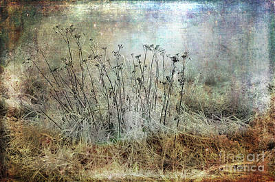 Photograph - Cold Flowers by Randi Grace Nilsberg