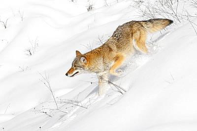 Photograph - Cold Hunter by Steve McKinzie