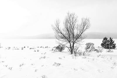 Art Print featuring the photograph Cold Loneliness by Hayato Matsumoto