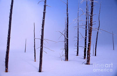 Art Print featuring the photograph Cold Morning by Edward R Wisell
