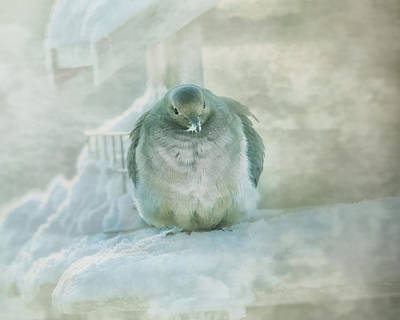 Dove Photograph - Cold Mourning Dove by Susan Capuano