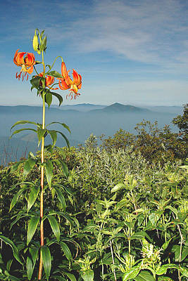 Cold Mtn. And Turk's Cap Lily Art Print by Alan Lenk