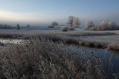 Frost Photograph - Cold by Nina Pauli