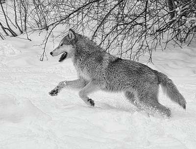 Photograph - Cold Run by Steve McKinzie