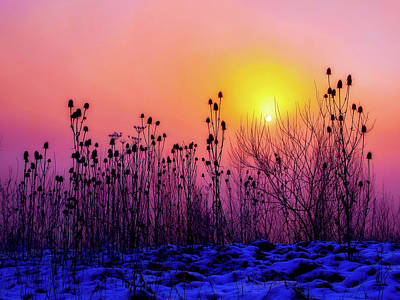 Photograph - Cold Silence by Kathy Buscher