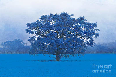 Photograph - Cold Tree In A Field Of Blue by Terri Waters