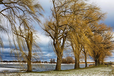 Photograph - Cold Windy Day by Tatiana Travelways