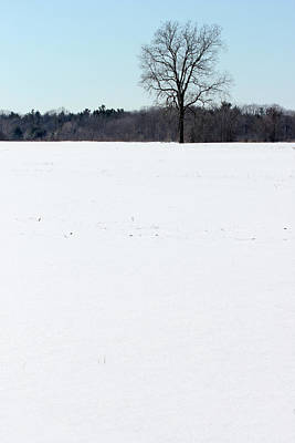 Photograph - Cold Winter Field by Mary Bedy