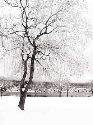 Photograph - Coldness by Tara Turner