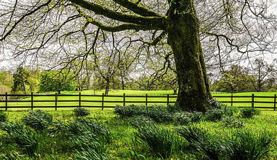Photograph - Colebrooke Park - County Fermanagh Ireland by Lexa Harpell