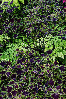 Photograph - Coleus And Maidenhair Fern Leaves  by Tim Gainey