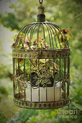 Photograph - Coleus In Vintage Birdcage by Allen Nice-Webb