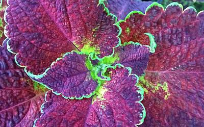 Photograph - Coleus Leaf 3 by Duane McCullough