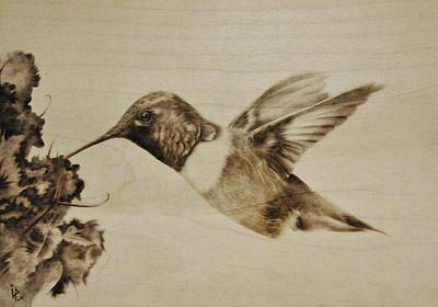 Pyrography Pyrography - Colibri by Ilaria Andreucci