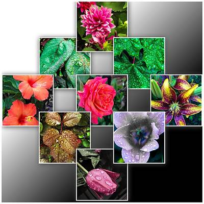 Photograph - Collage Of Spring Flowers by Cate Franklyn
