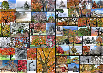 Photograph - Collage Of Trees by Janice Drew