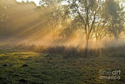 Impressionism Photos - Collar of sunlight by Heiko Koehrer-Wagner