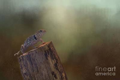 Photograph - Collared Lizard by Eva Lechner