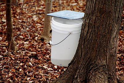 Photograph - Collecting Sap by Debbie Oppermann