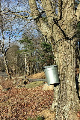 Sugaring Season Photograph - Collecting Sap by Monique Flint