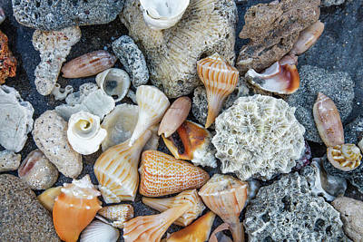 Photograph - Collection Of Seashells On The Beach by Debra and Dave Vanderlaan