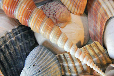 Photograph - Collection Of Shells by Angela Murdock