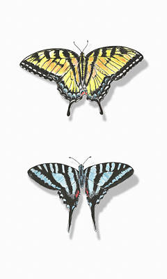 Single Object Drawing - Collection Of Two Butterflies by Masha Batkova