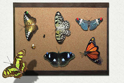 Lepidopterist Photograph - Collector - Lepidopterist - My Butterfly Collection by Mike Savad