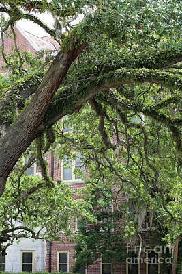 Photograph - Collegiate Tree by Carol Groenen