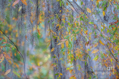 Photograph - Colliage Of Autumn Colors by Dale Powell