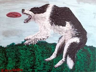 Collie Catch Original