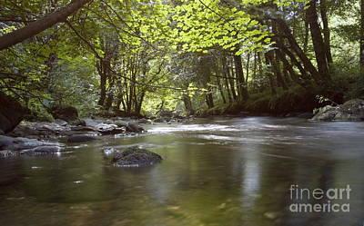 Colligan River 2 Art Print