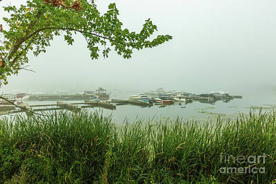 Photograph - Collins Bay Fog by Roger Monahan