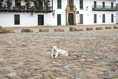 Digital Art - Colombia Villa De Leyva Plaza Meyor White Dog by Carol Ailles