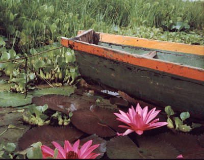 Colombian Boat And Flowers Art Print by Lawrence Costales