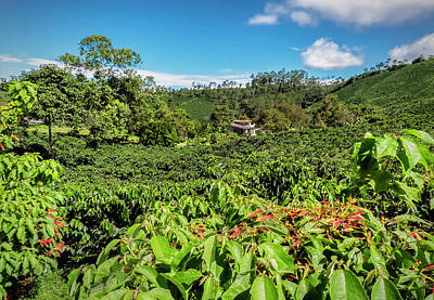 Featured Tapestry Designs - Colombian Coffee Plantation by Michael Evans