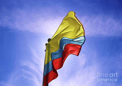 Moody Trees - Colombian Flag by Douglas Milligan