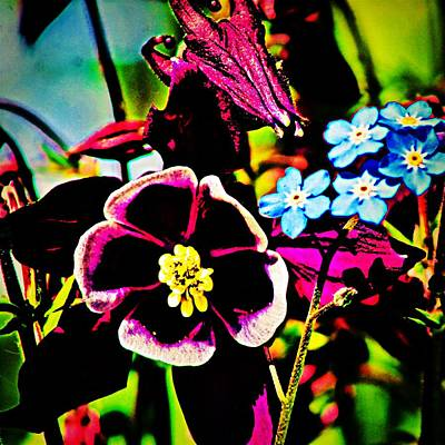 Photograph - Colombine And Forget Me Nots by Modern Art