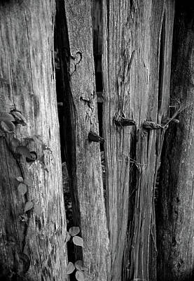 Photograph - Colonial Fence by Karen Harrison