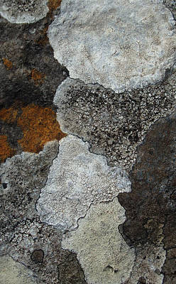 Photograph - Colonies 3 - Volcanic Rock Lichen by Robert Schaelike