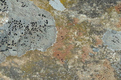 Photograph - Colonies - Ornamental Lichens On Rock by Robert Schaelike