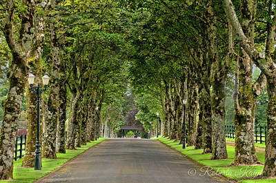 Photograph - Colonnade Of Trees by Roberta Kayne