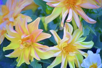 Photograph - Color 154 by Pamela Cooper