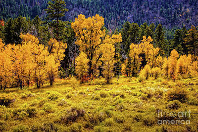 Color Along The Poudre Print by Jon Burch Photography