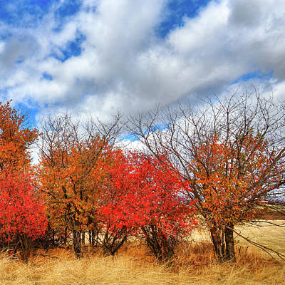 Photograph - Color At Magpie Forest by David Patterson