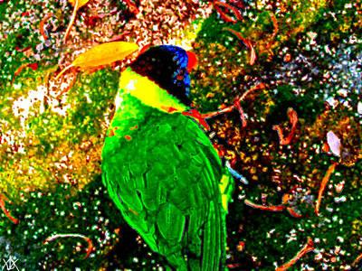 Bird On The Ground Mixed Media - Color Bird Blast by Debra     Vatalaro