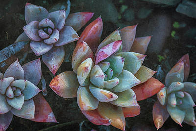 Photograph - Color Book Succulents by Jade Moon