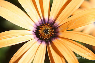Color Burst Art Print by Amy Holmes