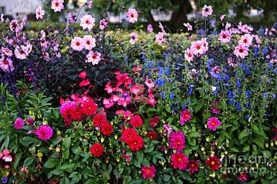 Blue Begonias Photograph - Color Burst Garden In Oslo by Carol Groenen